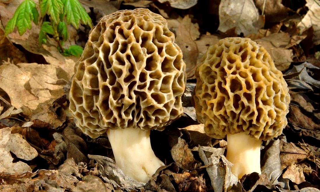 В Испании женщина умерла после употребления грибов