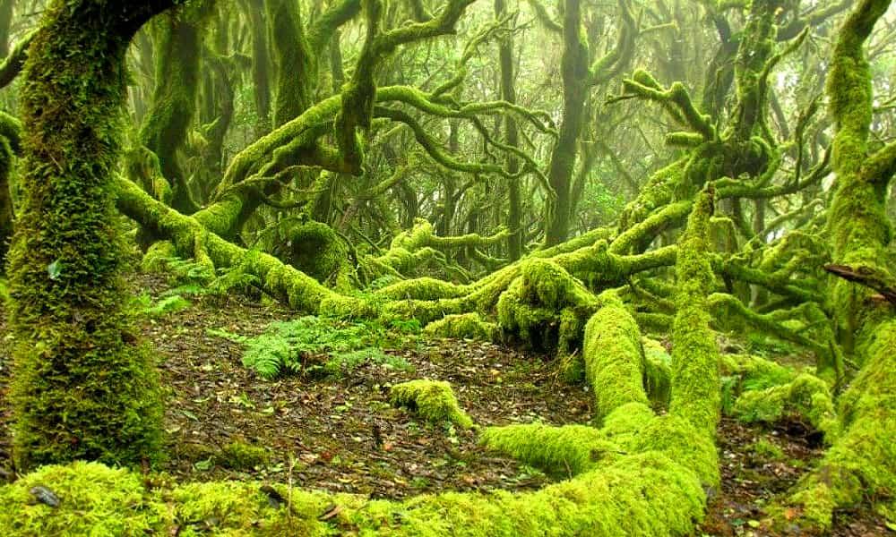 Национальный парк Гарахонай (Parque Nacional de Garajonay)