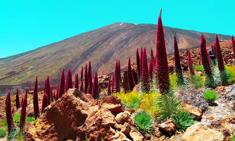 Парк Тейде (Parque Nacional del Teide)