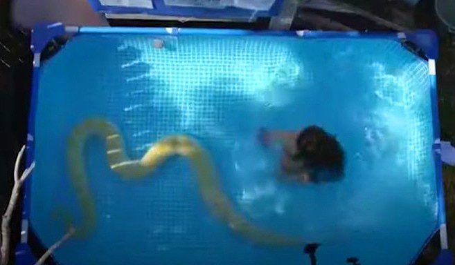 8-метровый питон и 8-летняя девочка в бассейне