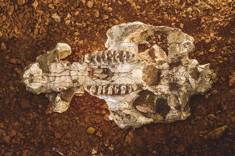 Испанская Кан-Мата: настоящие залежи окаменелостей