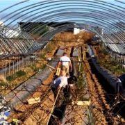 Испании нужны не иммигранты, а их рабочие руки: «циркулярная миграция»